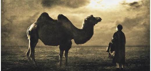 ibn arabi camel of love