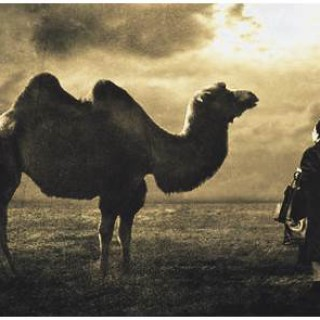 ibn arabi camel of love