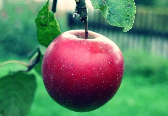 the apple - sufi story of mansoor hallaj